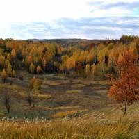 Осінній ліс, с. Черешеньки