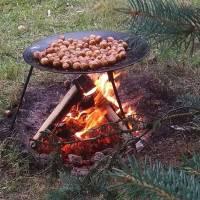антоновичцька картопля
