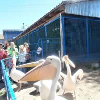 Біля загону з пеліканами в зоопарку м.Мена