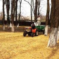 Білування дерев в парку