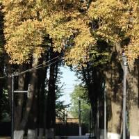 Алея парку