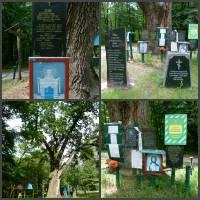 Ботанічна пам'ятка природи