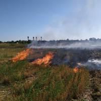 Загорання сухої травита бур'янів