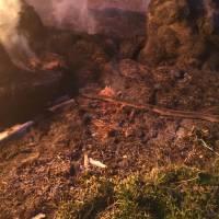 Загорання соломи в с. Ничипорівка