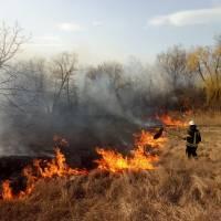 Ліквідовано загорання сухої трави, чагарників та очерету
