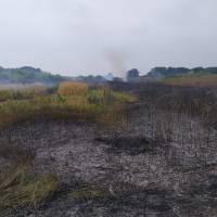 Загорання сухої трави та чагарниківв м. Яготин