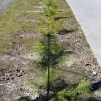 Процес озеленення розпочали на стадіоні «Колос»