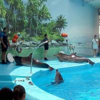 Подорож до дельфінарію