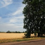 Родючі поля Новопетрівської сільської ради