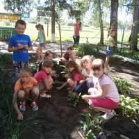 Догляд за шкільними квітами