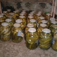 Урожай овочів прийдеться школярам до смаку
