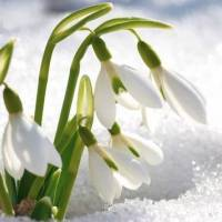 RTEmagicC_Spring-1_01.jpg