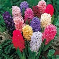 big-Весняні квіти