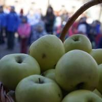 Запашні яблука