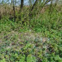 Так відноситься частина глобинців до довкілля Берег річки Сухий Омельник в нежитловій зоні вулиці Мічуріна