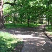 Дендрологічний парк «Лікарський сад»