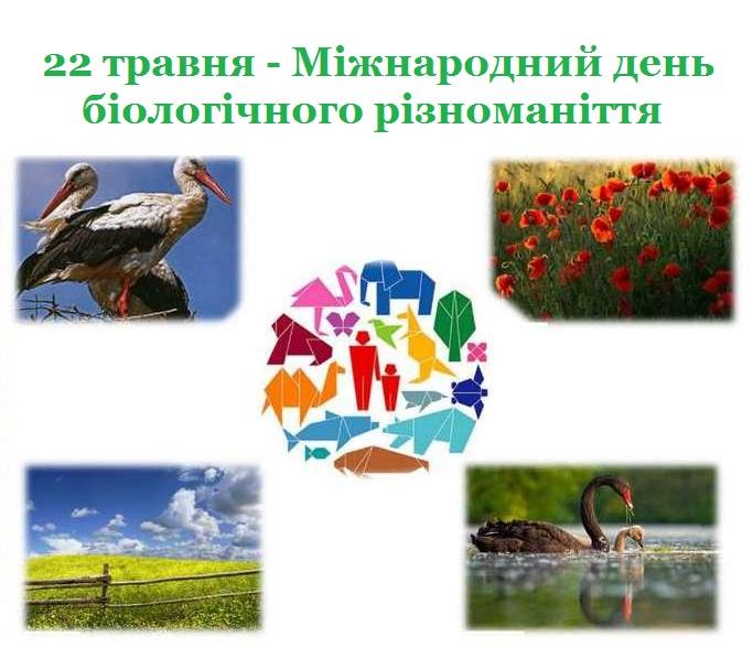 Novokalynivska miska rada 22 travnia - Mizhnarodnyi den biolohichnoho riznomanittia