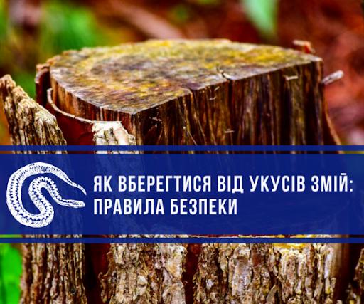 Shcho robyty pry ukusi zmii i yak vberehtysia vid tsoho Novokalynivska miska rada