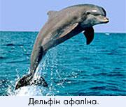 Дельфіни Чорного моря