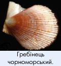 Дрібна фауна моря
