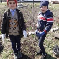 Акція «Посади своє дерево»