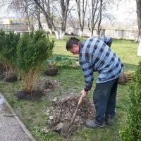 До  Дня довкілля-2019 організовано висадка дерев та кущів