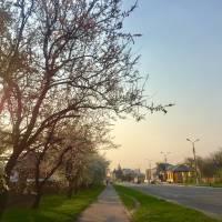 Весна в Чорнобаї, 2019 рік
