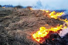 Про покарання та наслідки від паління сухої трави