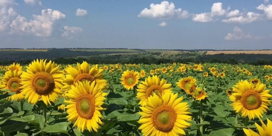 Вітаємо на офіційному сайті Долматівської сільської ради Голопристанського району Херсонської області!