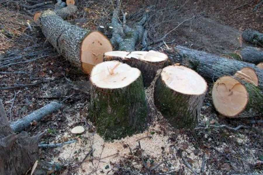 Вирізання дерев
