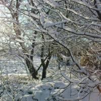 Таганча - зима