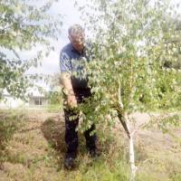 Благоустрій території біля сільського ставка с. Ліпляве