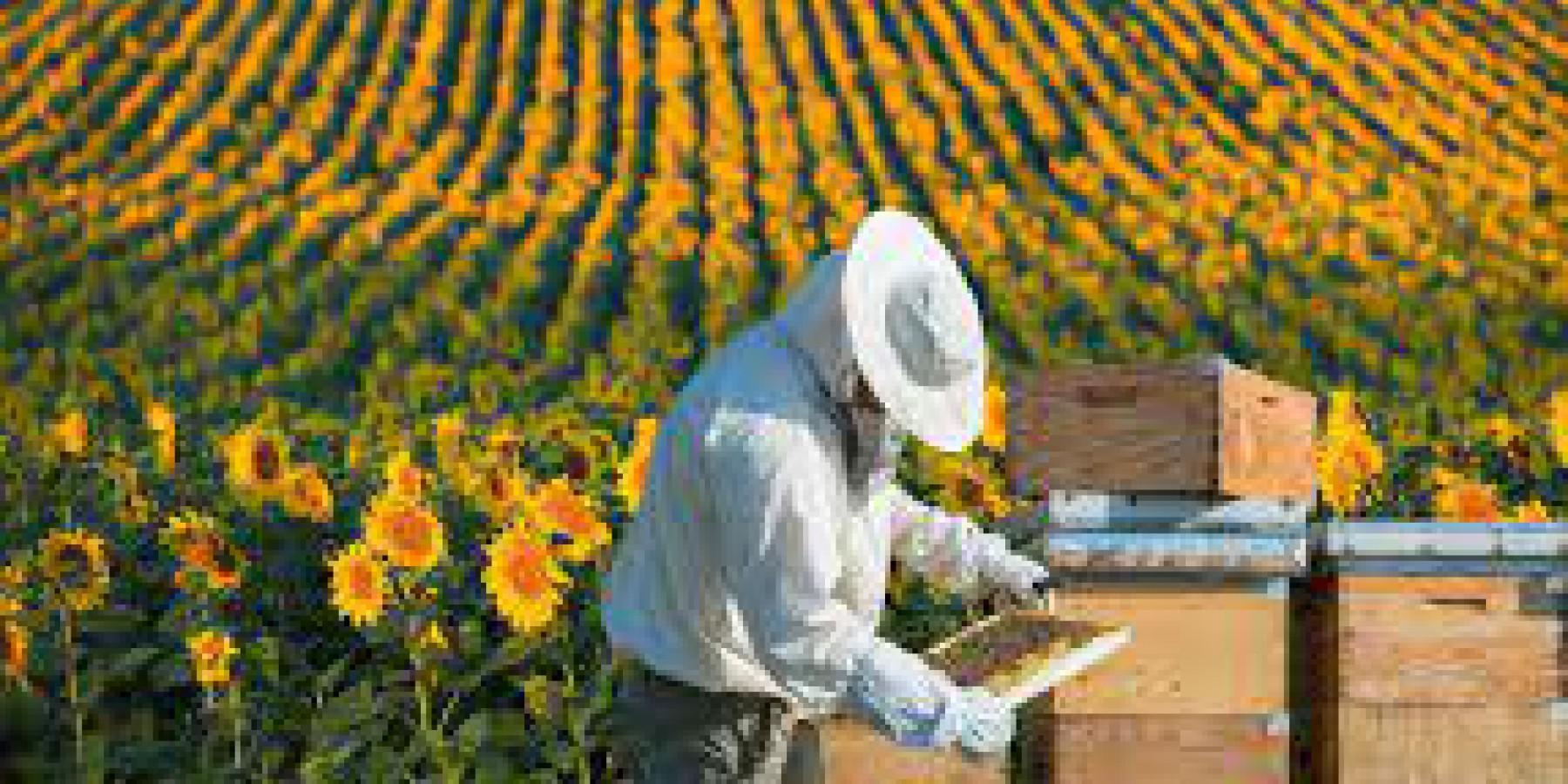 Уряд продовжив дію програми підтримки галузі тваринництва, зокрема бджільництва, на 2021 рік.
