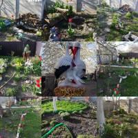 Присяжнюк Ліна Йосипівна, Мій тихий сад                 м. Жашків , віл. В. Лисака 28