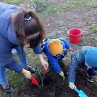 Посади дерево.  Куликівський  ЗДО «Ромашка»